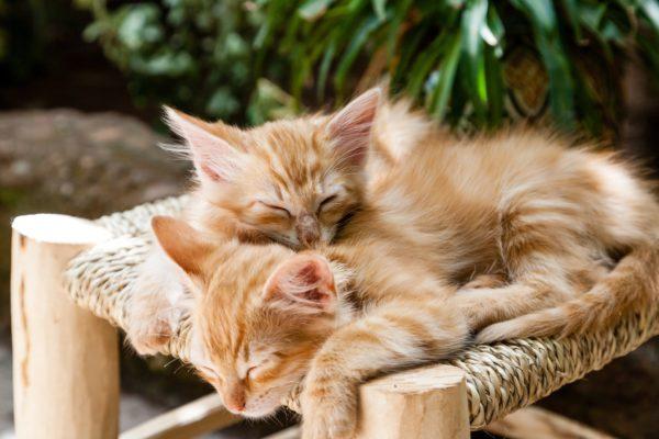 El bufido de gato: todas las posibles motivaciones