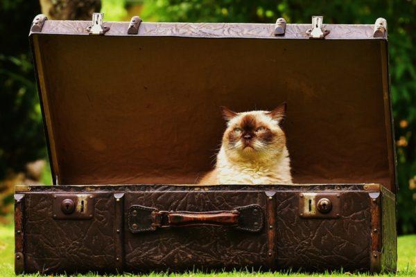 ¿Cómo llevo a mi gato al veterinario sin que se estrese?