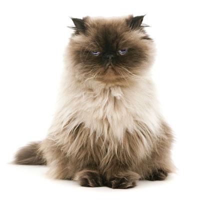 Plan senior gatos