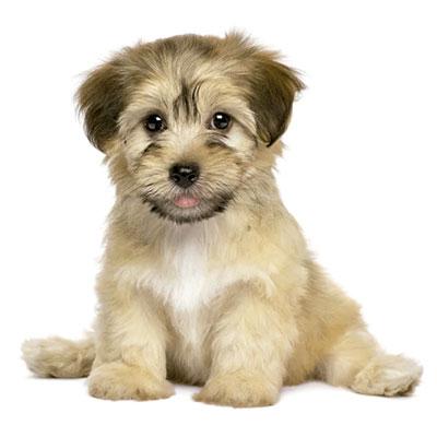 Plan cachorro perros