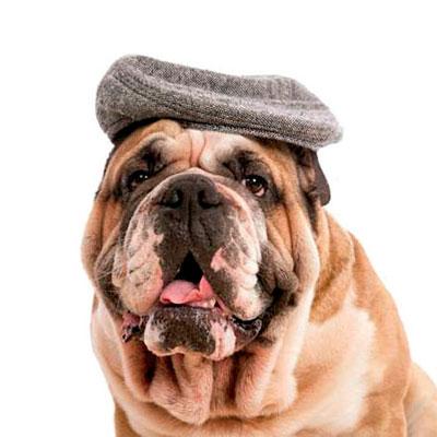 Plan senior perros